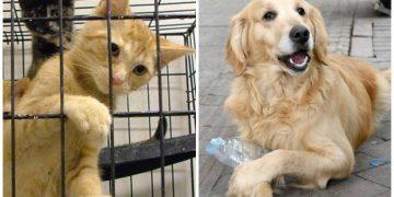 İnanalım mı: Kedi ve Köpekleri Sokağa Terk Edenlere Ceza, Pet-Shop'lara Yaptırımlar