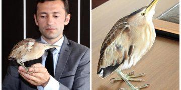 Nesli Tükenmekte Olan Kuşun Hayatını İşi Pahasına Kurtaran Kastamonulu Memur
