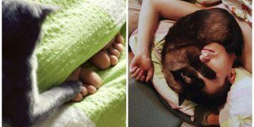 """Gerçek Bir """"Kedi Manyağı"""" Olduğunuzun 21 Bol Miyavlı İşareti"""