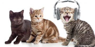 Bilim İnsanları Besteledi: Kedilerin Yaş Mamadan Daha Çok Seveceği Şarkı
