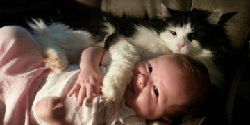 """Bilim Adamlarından """"Kedilere Nankör Diyenlere"""" Tokat Gibi Gelecek Açıklama"""