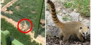Elektrikli Vahşetin Yaşandığı Eskişehir Hayvanat Bahçesi'nin Kapatılması İçin 8 Geçerli Neden