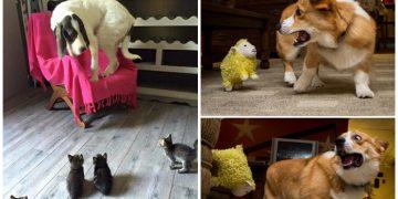 Korktuklarında Aşırı Şapşik Olan Birbirinden Komik 17 Köpek