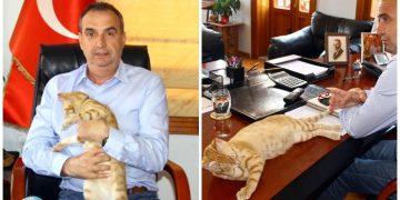 Sokak Kedisine Kendi Odasını Veren Örnek Belediye Başkanı