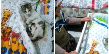 Sivas'ta Eve Gizlice Girip Bebeğin Beşiğine Doğum Yapan Anne Kedi