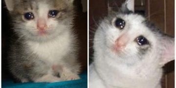 Karadeniz'de Yaş Mama Gemileri Batmış Kadar Üzgün Olan 9 Hüzünlü Kedi