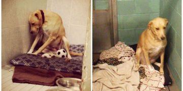 """Eğer Birkaç Gün İçinde Sahiplenilmezse Uyutulacak Olan """"Dünyanın En Üzgün Köpeği"""""""