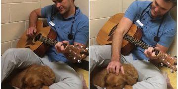 Gerilen Hayvanları Sakinleştirmek İçin Onlara Şarkılar Söyleyen Veteriner Hekim