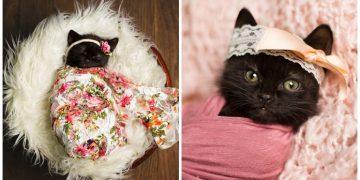 Yeni Doğan Bebeklerin Fotoğraflarını Çekiyordu, Kızı Yavru Bir Kedi Buldu Ve Harikalar Yarattı