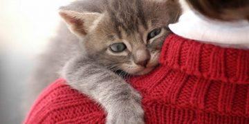 """Dünyanın En Muhteşem En Miyavsal İşi İçin Çalışanlar Aranıyor: """"Kedi Kucaklayıcısı"""""""