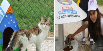 """İlkokul Öğrencilerinden Gözleri Buğulandıracak Proje: Kediler İçin """"Mutlu Patiler Parkı"""""""