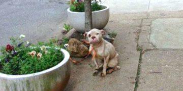 Postacı Güneşin Altında Bağlı Şekilde Bekleyen Köpeği Gördü ve Sahibine Unutamayacağı Bir Ders Verdi