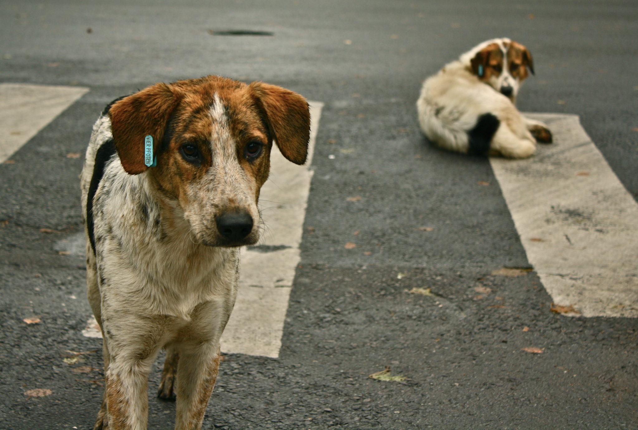 hayvan hakları ve bilinmesi gerekenler