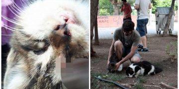 Adana'da Gözü Oyularak Vahşice Öldürülen Zavallı Yavru Kedi