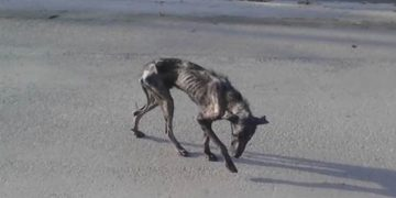 Kimse Bu Köpeğin Yanına Yaklaşamıyordu  ki Karşısına Bir Hayvan sever Çıkıncaya Kadar