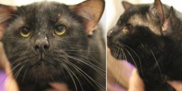 Barınağa Getirilen Kedi Barınak Görevlilerini Şaşkına Çevirdi