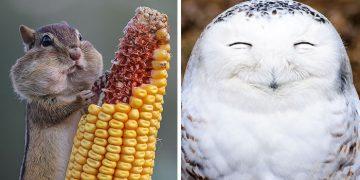 Gördüğünüz Anda Yüzünüzde Gülümsemeler Yaratacak 18 Komik Hayvan