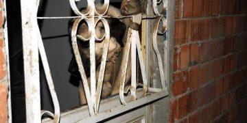 Yazıklar Olsun: Tokat'ta Ayakları Bağlanarak Tecavüze Uğrayan Köpek