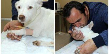 Havuçla Canice Tecavüz Edildikten Sonra Ölen Küçük Köpek…