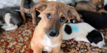 Öğrenelim: Sokak Hayvanları İçin Yardım Telefonları