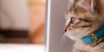 Kedilerin Özgür Ruhu ve Tasma