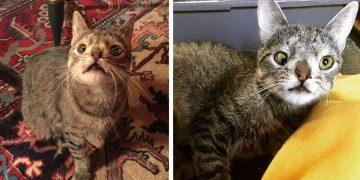 """Gözlerine İlk Bakışta Aşık Olacağınız Güzel Gözlü Kedi """"Sugarplum""""un Hüzün ve Umut Dolu Hikayesi"""