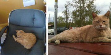 20 Yıllık Belediye Başkanı Kedi Stubbs, Nesillerce Yaşayacak Bir Miras İle Hayata Gözlerini Yumdu