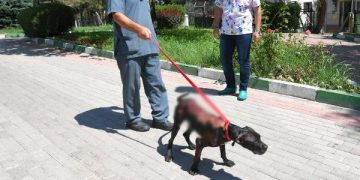 Bursa'da Vahşet: Köpeğin Üzerine Kaynar Su Döküp Kaçan Vicdansızlar