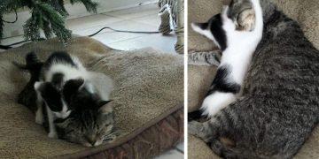 Yavrularıyla Açık Camdan İçeri Girdiği Evi Sahiplenen Kedinin Gülümseme Garantili Hikayesi