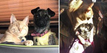Görme Engelli Kedi ve Felçli Köpeğin Gözleri Yaşartan Dostluğu
