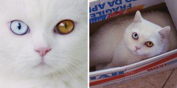 Gözlerine Baktığınızda Kalbinizi Küt Küt Attıracak Kedi Tihon İle Tanışın