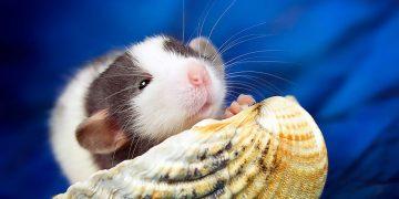 Hamsterlar Neden Çok Uyur?