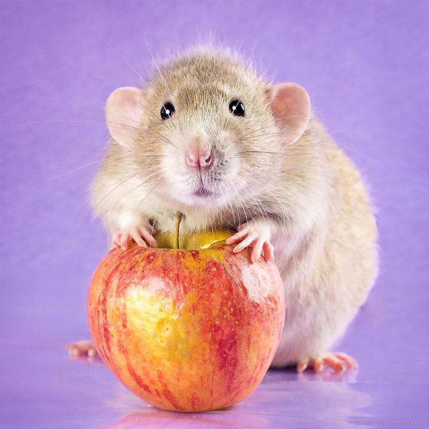 Hamsterlar, Hamster Bakımı, Hamster Özellikleri