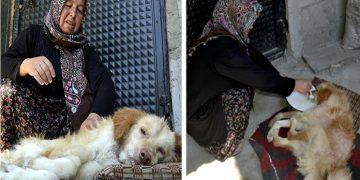 Sen Çok Yaşa Ayten Teyze: Felçli Köpeğine Çocukları Gibi Bakıp Elleriyle Besliyor