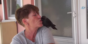 Kendini Muhabbet Kuşu Sanan Karga Yakup'un Aşırı Sevimli Hikayesi