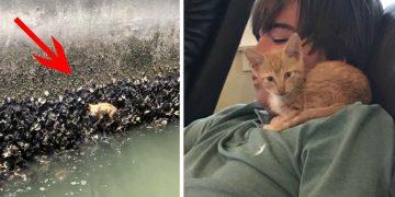 Yavru Kedi Ölmemek İçin İstiridyelere Tutundu Ve…