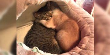 Kardeşlerinden Ayrı Kaldığı İçin Mutsuz Olan Yavru Kedinin Hüzün ve Umut Dolu Hikayesi