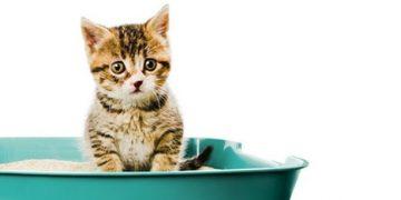 Öğrenelim: Evde Yavru Kedilerimize Tuvalet Eğitimi Nasıl Verebiliriz?