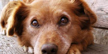 Köpek Fobisini Yenmeniz İçin Bilmeniz Gereken 13 Etkili Bilgi