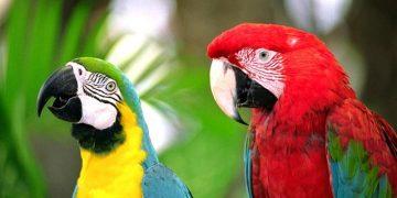 Papağanımıza Ne Tür Yemler Verebiliriz?