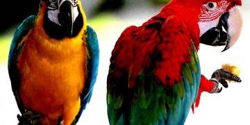 Papağanlara Verilmesi Gereken Ek Besinler Nelerdir?