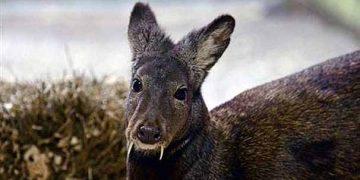Dünya Üzerinde Yaşamın En İlginç 5 Hayvan Türü