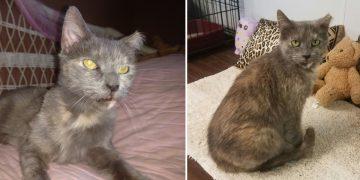 Yıllarca Sahiplenmeyi Bekleyen 15 Yaşındaki Yaşlı Kedi Bakın Nasıl Sahiplendiriliyor