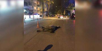 Yer Antalya: Aşırı Sıcak ve Susuzluktan Ölen Atın Vicdansız Sahibi Bırakıp Kaçtı