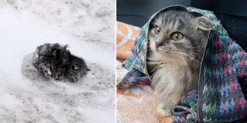 Diğer İnsanlar Görmezden Geldi Ama O Karda Donmak Üzere Olan Kediye Hayat Oldu