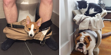 Kendini Kedi Sanan 23 Köpeğin Aşırı Sevimli Fotoğrafları