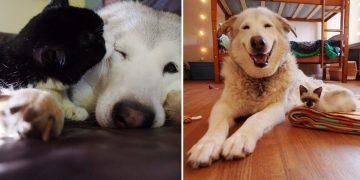 Dostu Vefat Edince Mutsuz Olan Köpeği Teselli Eden Yavru Kediler ve İçinizi Güneş Gibi Isıtacak Hikayesi