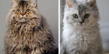 Öğrenelim: 57 Kedi Irkı ve Özellikleri