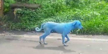 Hayvanların Bu Dünyada Bizden Neler Çektiklerini Gösteren Olay: Mavi Köpekler