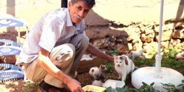 Sokak Kedilerinin de Muhtarı Olan Koca Yürekli Hayvansever Mehmet Ali Turgut